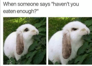 """Vegan, Dank Memes, and You: When someone says """"haven't you  eaten enough?"""" Found it on a vegan forum"""