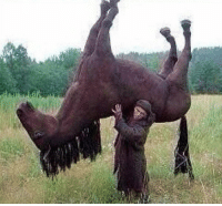 "Funny, Horses, and Hold: When someone says ""hold your horses"" https://t.co/R4LHYB9yXx"