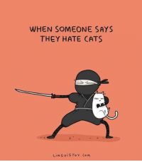 Cats, Grumpy Cat, and Cat: WHEN SOMEONE SAYS  THEY HATE CATS  LiNG, v i s To v Co M