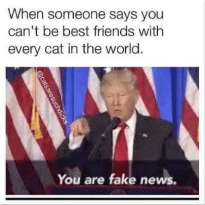 When Someone Says: When someone says you  can't be best friends with  every cat in the world.  You are fake news.  aresuchdicks