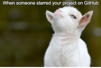 Proud, Github, and Project: When someone starred your project on GitHub So proud