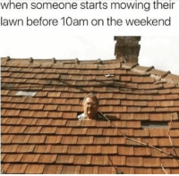 Memes, The Weekend, and Today: when someone starts  mowing  their  lawn before 10am on the weekend 60 RANDOM MEMES FOR TODAY #240