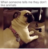 When people say that I immediately don't like them! 👊🏽 • Repost @thisisthe_aardvark ・・・ relate accurate relatemuch relatable canconfirm meme memesdaily videomeme hilarious lol funny funnyvideo video fluffy cute pug dog doghumor dogmeme ILoveDogs BePawsitive🐾 iloveanimals: When someone tells me they don't  like animals When people say that I immediately don't like them! 👊🏽 • Repost @thisisthe_aardvark ・・・ relate accurate relatemuch relatable canconfirm meme memesdaily videomeme hilarious lol funny funnyvideo video fluffy cute pug dog doghumor dogmeme ILoveDogs BePawsitive🐾 iloveanimals