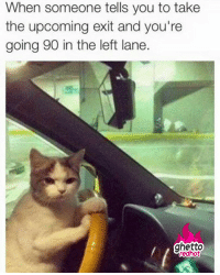"""Driving, Ghetto, and Meme: When someone tells you to take  the upcoming exit and you're  going 90 in the left lane.  ghetto  redhot <p><strong>Sweet more cat memes</strong></p><p><a href=""""http://www.ghettoredhot.com/cat-driving-meme/"""">http://www.ghettoredhot.com/cat-driving-meme/</a></p>"""