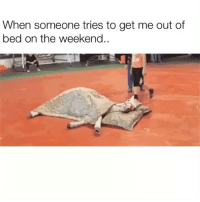 Funny, The Weekend, and How: When someone tries to get me out of  bed on the weekend.. How bout nah🐴💤 sleepysaturday