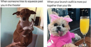Dogs, Fresh, and Life: When someone tries to squeeze past  you in the theater  When your brunch outfit is more put  together than your life  EmotionallyBoujee/ Delivery! Fresh hot doggo memes at your service!#dogs #dogmemes #funnymemes #funnydogs #animalmemes