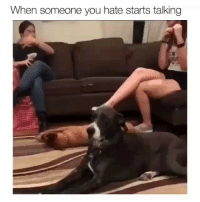Memes, Animal, and Best: When someone you hate starts talking @animalsmeettheinternet has the best compilation of animal memes on IG!