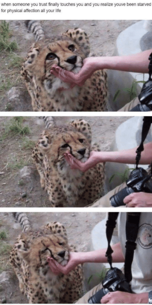 Wholesome cheetah: when someone you trust finally touches you and you realize youve been starved  for physical affection all your life Wholesome cheetah