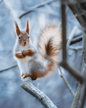 When Squirrel does posing.: When Squirrel does posing.