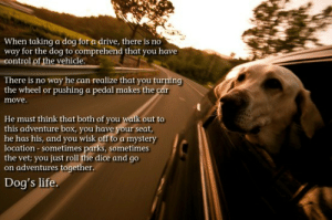 Dogs, Life, and Memes: When taking a dog for a drive, there is no  way for the dog to comprehend that you have  control of the vehicle  There is no way he can realize that you turning  the wheel or pushing a pedal makes the car  move  He must think that both of you walk out to  this adventure box, you have your seat  he has his, and you wisk off to a mystery  location sometimes parks, sometimes  the vet; you just roll the dice and go  on adventures together.  Dog's life