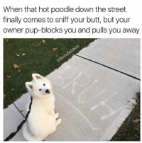 Butt, Memes, and Pup: When that hot poodle down the street  finally comes to sniff your butt, but your  owner pup-blocks you and pulls you away I am disappoint | 👉 @betasalmon for more