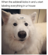 25+ Best When the Adderall Kicks in Memes | Colour Memes