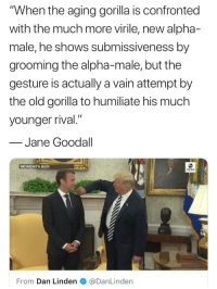 "News, Politics, and White House: ""When the aging gorilla is confronted  with the much more virile, new alpha-  male, he shows submissiveness by  grooming the alpha-male, but the  gesture is actually a vain attempt by  the old gorilla to humiliate his much  younger rival.""  Jane Goodall  MOMENTS AGO  NEWS  From Dan Linden @DanLinden"