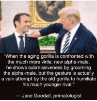 "Old, Jane Goodall, and Gorilla: ""When the aging gorilla is confronted with  the much more virile, new alpha-male,  he shows submissiveness by grooming  the alpha-male, but the gesture is actually  a vain attempt by the old gorilla to humiliate  his much younger rival.""  13  Jane Goodall, primatologist CALL TO ACTIVISM"