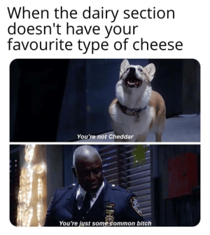 I dont give a hoot: When the dairy section  doesn't have your  favourite type of cheese  You're not Cheddar  You're just some common bitch I dont give a hoot