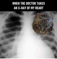 You already know what my heartbeats sound like⠀ -⠀ By @missenell⠀ -⠀ @meowed meowed cat 9gag: WHEN THE DOCTOR TAKES  AN X-RAY OF MY HEART You already know what my heartbeats sound like⠀ -⠀ By @missenell⠀ -⠀ @meowed meowed cat 9gag