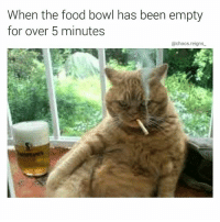 Food, Memes, and Bowling: When the food bowl has been empty  for over 5 minutes  @chaos.reigns pls have a seat we need to talk (thanks for following @chaos.reigns_)