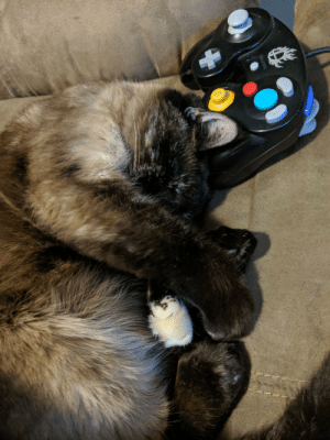 When the gaming sesh goes on a bit too late.: When the gaming sesh goes on a bit too late.