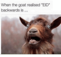 "GOAT: When the goat realised ""EID""  backwards is"