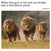 Gym, Free, and Fitness: When the gym is full and you finally  see a free bench press  @gymaholic When the gym is full  And you finally see a free bench press.  More motivation: https://www.gymaholic.co  #fitness #motivation #gymaholic