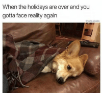 Reality, Tank, and Sinatra: When the holidays are over and you  gotta face reality again  @tank.sinatra
