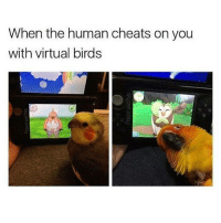 virtualization: When the human cheats on you  with virtual birds  s on you