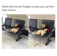 School, Ted, and Grumpy Cat: When the human forgets to pick you up from  kitty school  @hilarious, ted