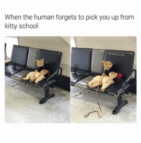 Stupid hooman (@hilarious.ted): When the human forgets to pick you up from  kitty school  @hilarious.ted Stupid hooman (@hilarious.ted)
