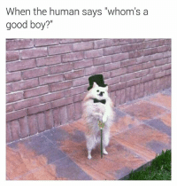 "I hope I got the grammar right on this post (thx for following @chaos.reigns_): When the human says ""whom's a  good boy?'"" I hope I got the grammar right on this post (thx for following @chaos.reigns_)"