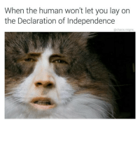 Memes, Declaration of Independence, and 🤖: When the human won't let you lay on  the Declaration of Independence  @chaos.reigns I feel so attacked chaosreigns