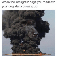 Funny, Instagram, and Page: When the Instagram page you made for  your dog starts blowing up 😮