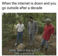 Funny, Internet, and Lol: When the internet is down and you  go outside after a decade  What type of dog is this?  This is a tortoise Lol