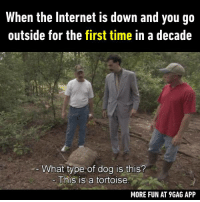 9gag, Dank, and Funny: When the Internet is down and you go  outside for the first time in a decade  What type of dog is this?  This is a tortoise  MORE FUN AT 9GAG APP Never heard of it before.  https://9gag.com/gag/aY4425V/sc/funny?ref=fbsc
