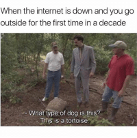 Internet, Time, and Trendy: When the internet is down and you go  outside for the first time in a decade  What type of dog is this?  This is a tortoise. @jokezar is a must follow