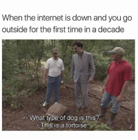 Internet, Memes, and Time: When the internet is down and you go  outside for the first time in a decade  What type of dog is this?  This is a tortoise Do NOT follow @drgrayfang if you're easily offended 😂