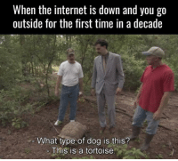 """Internet, Http, and Nature: When the internet is down and you go  outside for the first time in a decade  What type of dog is this?  - This is a tortoise <p>Exploring nature when the internet's down.. via /r/wholesomememes <a href=""""http://ift.tt/2gwc4Ys"""">http://ift.tt/2gwc4Ys</a></p>"""