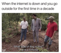 Internet, Memes, and Help: When the internet is down and you go  outside for the first time in a decade  What type of dog is this?  This is a tortoise.  SP Help 😫 Follow @thepettybitch @thepettybitch @thepettybitch @thepettybitch