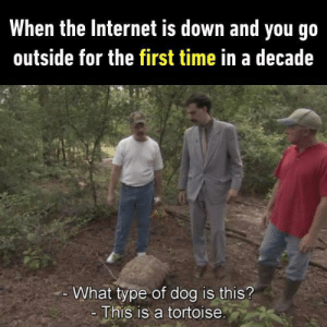Sad but true by Darkplaya1 MORE MEMES: When the Internet is down and you go  outside for the first time in a decade  What type of dog is this?  This is a tortoise. Sad but true by Darkplaya1 MORE MEMES