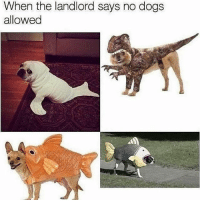 Funny, Dog, and Can: When the landlord says no dog:s  allowed Seems legit he can stay