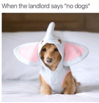 "Dogs,  No, and  Landlord: When the landlord says ""no dogs"""