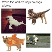 """<p>When the landlord says no doggos: via /r/wholesomememes <a href=""""http://ift.tt/2yWLCyu"""">http://ift.tt/2yWLCyu</a></p>: When the landlord says no dogs  allowed <p>When the landlord says no doggos: via /r/wholesomememes <a href=""""http://ift.tt/2yWLCyu"""">http://ift.tt/2yWLCyu</a></p>"""