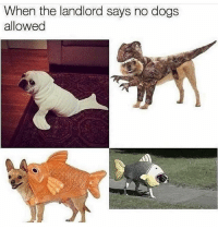 Checkmate: When the landlord says no dogs  allowed Checkmate