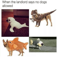 https://t.co/3hxFPlSSnO: When the landlord says no dogs  allowed https://t.co/3hxFPlSSnO