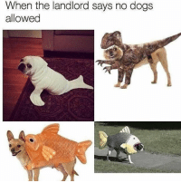 You don't know who you're dealing with: When the landlord says no dogs  allowed You don't know who you're dealing with