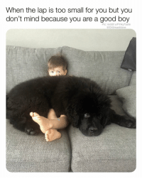 Beautiful, Bless Up, and Costco: When the lap is too small for you but you  don't mind because you are a good boy  Pic: reddit u/Pinky Taste  @DrSmashlove This lil boy is how I'm tryina be all winter cuffed up with a beautiful big girl who provide warmf and companionship whilst we watch Netflix and munch on healthy snacks like them sweet chili chick peas from Costco bless up 🙂🙂🙂🙂😍😂🔥