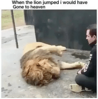 Heaven, Lion, and Dank Memes: When the lion jumped i would have  Gone to heaven For real tho!