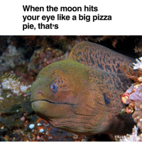 Pizza, Moon, and Irl: When the moon hits  your eye like a big pizza  pie, that's me🐟irl