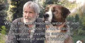 laughoutloud-club:  Let's go Chewy!!: When the mushrooms wear off and  you realize you're not a space  smuggler travelling across the  universe with a Wookie laughoutloud-club:  Let's go Chewy!!