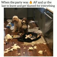 Af, Dogs, and Funny: When the party was AF and ur the  last to leave and get blamed for everything  @funpawcare Who do you think did it? 😂😍😭 @funpawcare . . @jolenethedollydoodle innocent free party partytime partylife play fun funtimes dynamicduo lmao puppylove doglover puppies puppy pupper puppers puppiesofinstagram dogstagram pets dogs dog funny love dogsofinstagram newpuppy newdog doglove doglovers furbaby workingdog