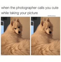 Memes, 🤖, and Bougie: when the photographer calls you cute  while taking your picture  @Dr Smashlove When u bad and bougie and also u a doggo 😍😂😂😂 (@thedryginger 👈)